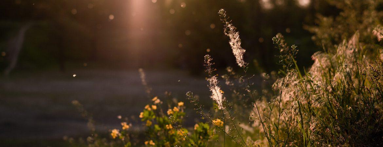 ALLERGIES/ASTHMA & DUST-MITES